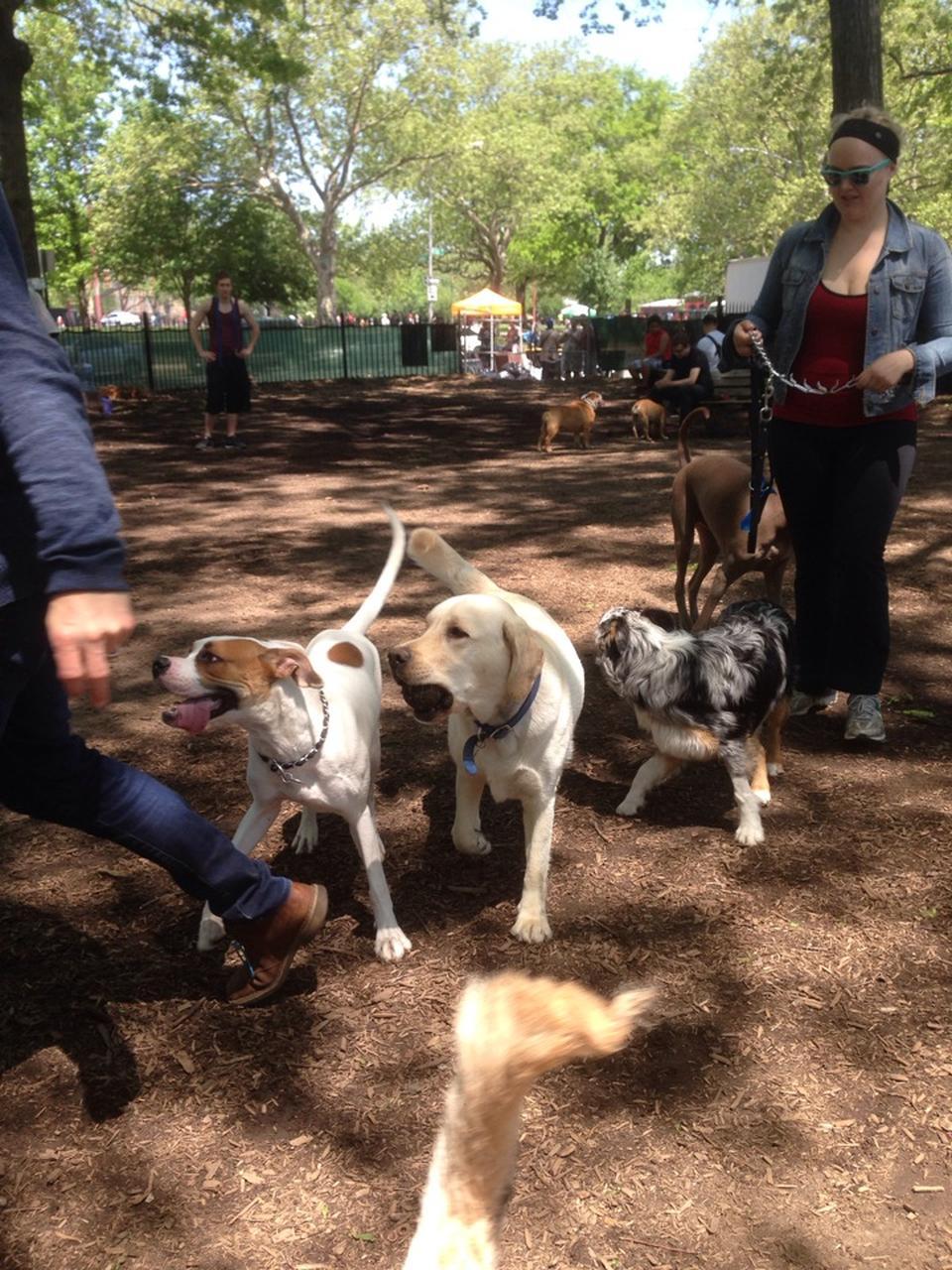 mccarren park dog run explore brooklyn