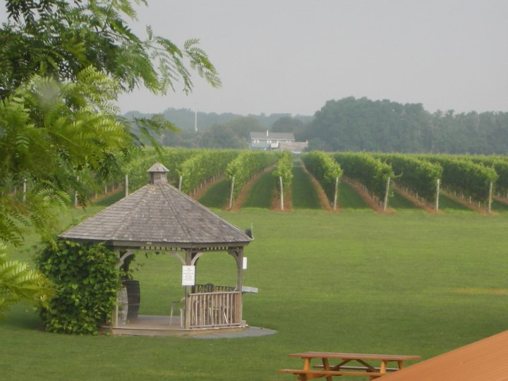 Osprey's Dominion Vineyards-7