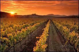 Palmer Vineyards-1