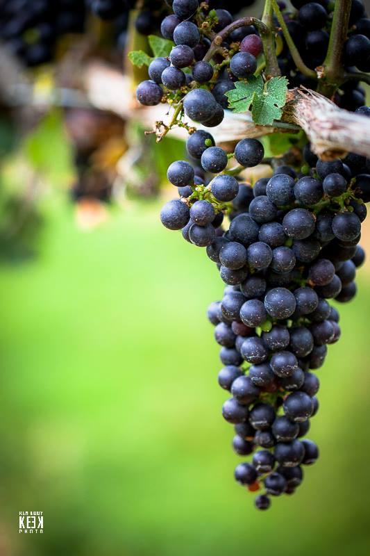 Palmer Vineyards-5