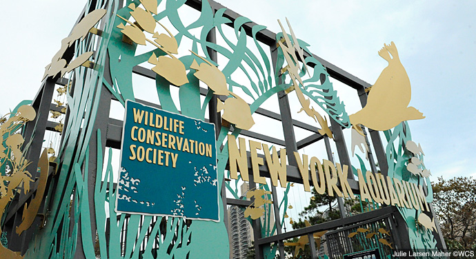 New York Aquarium Explore Brooklyn