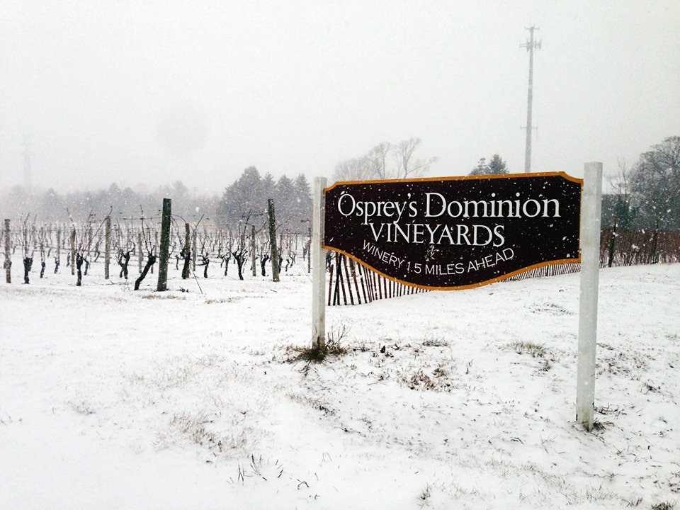 Osprey's Dominion Vineyards-2