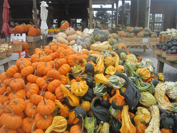 Bayview Farms & Market-13