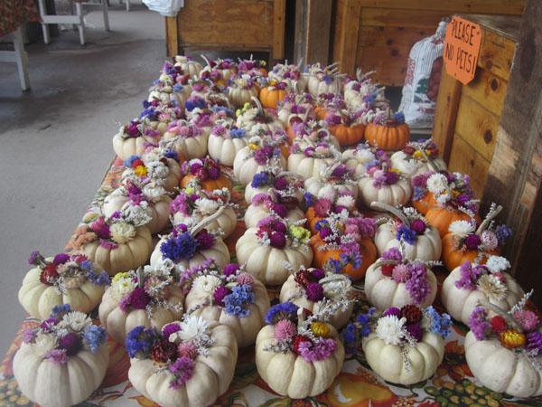 Bayview Farms & Market-15