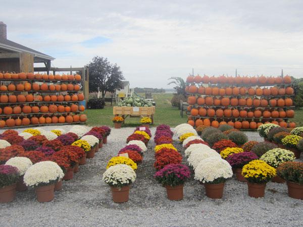 Bayview Farms & Market-16