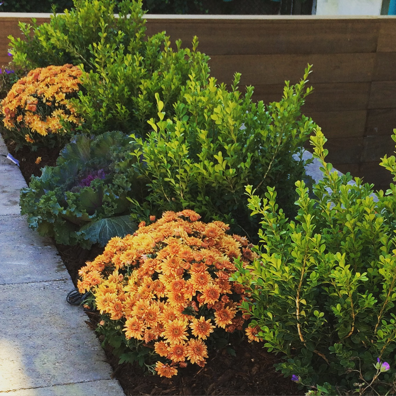 Dragonetti Brothers Landscaping, Nursery & Tree Care-2