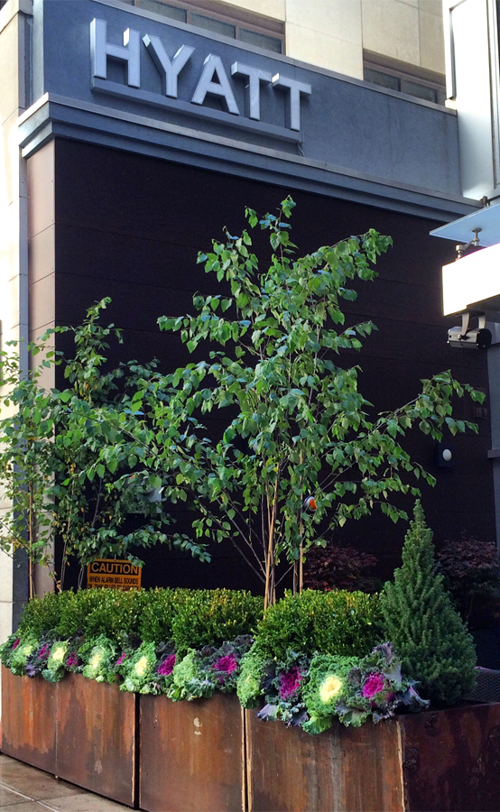 Dragonetti Brothers Landscaping, Nursery & Tree Care-3