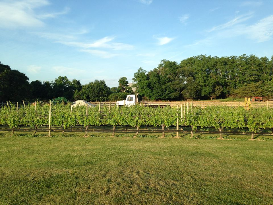 Jamesport Vineyards-2