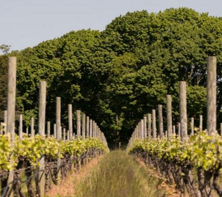 Northforker - North Fork food, wine, real estate and