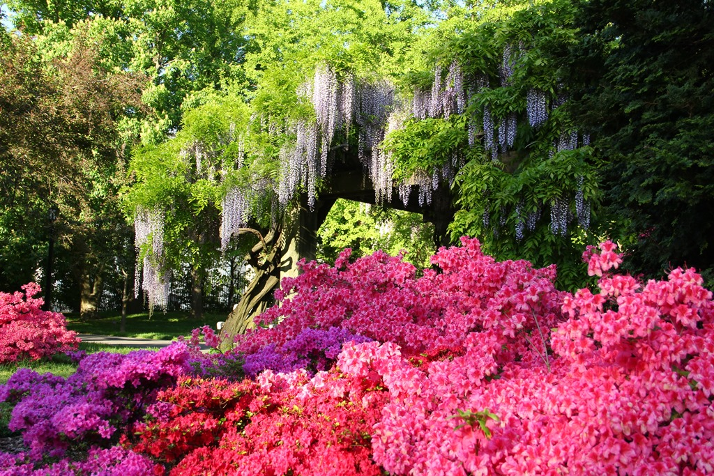 Brooklyn Botanic Garden Explore Brooklyn