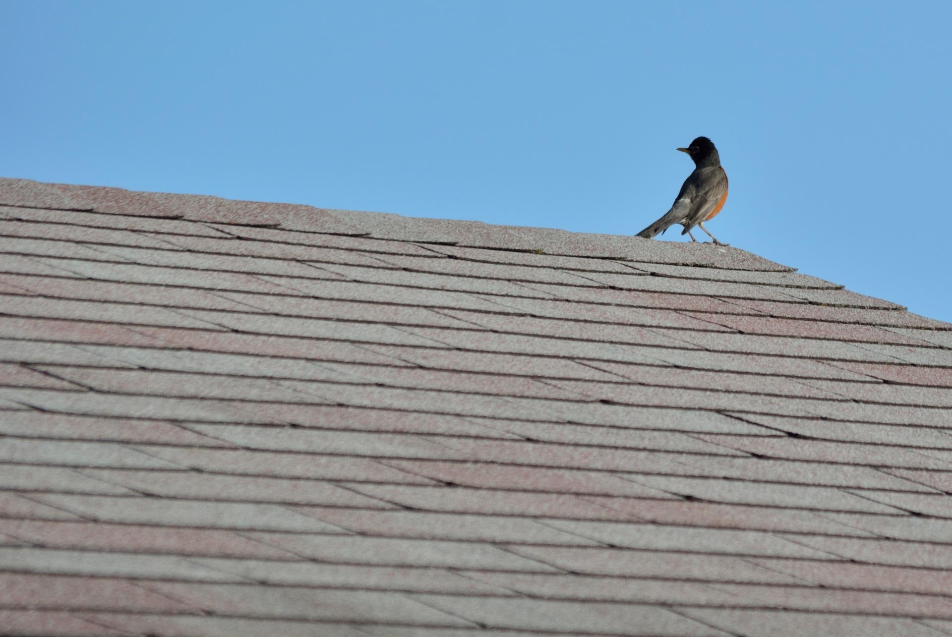 Verrazano Roofing and Restoration-6